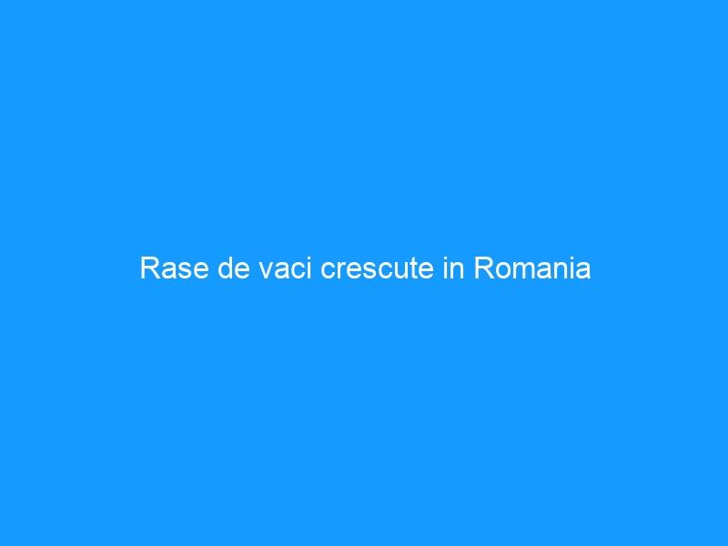 Rase de vaci crescute in Romania